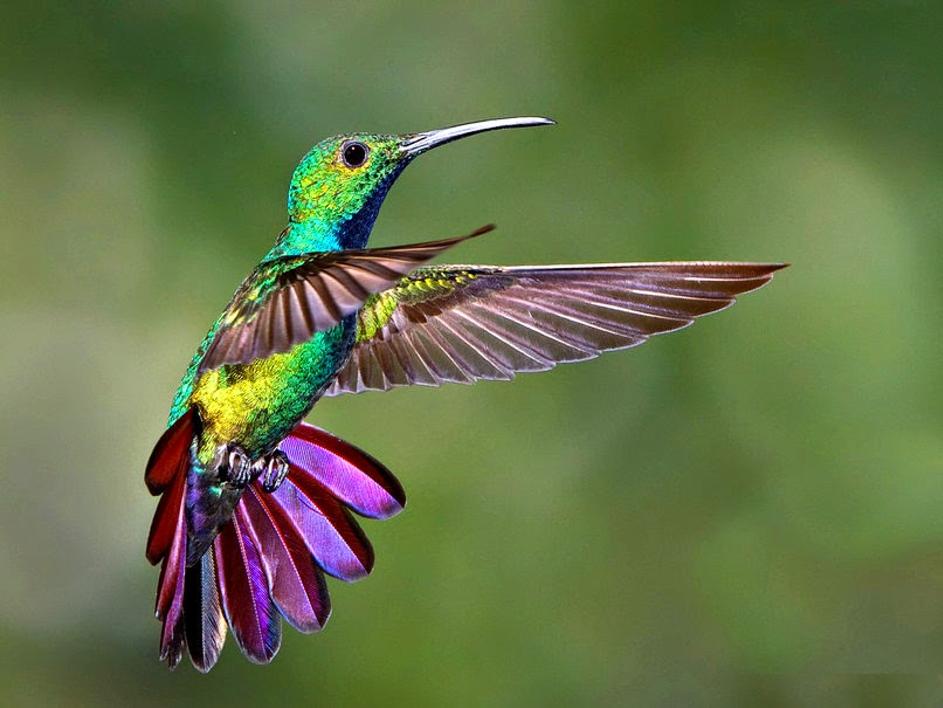 le-colibri-est-mon-oiseau-préféré
